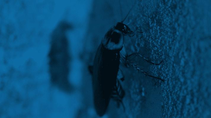 Cockroach in Blue