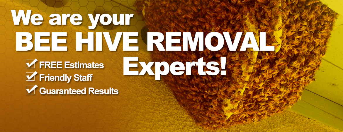 We are Your Beehive Removal Experts