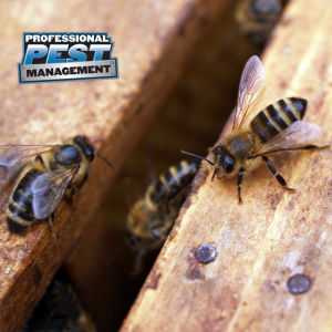 PPM Bee with logo