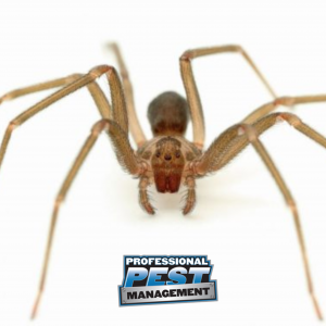 PPM Brown Recluse with Logo