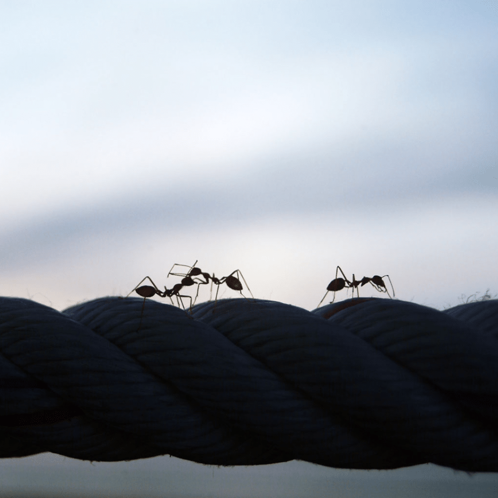 Ants on the rope squared