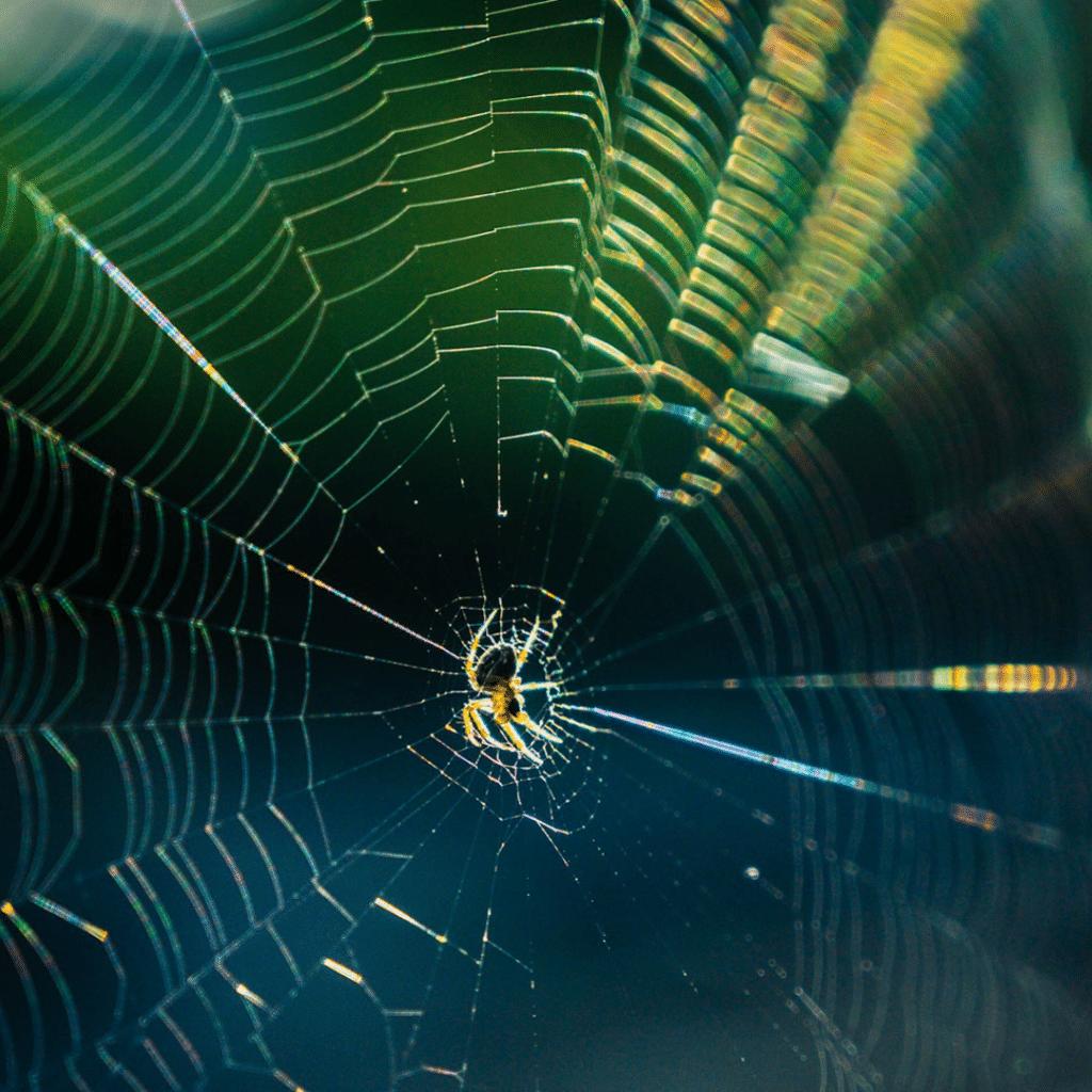 Spider Web with Spider in Center